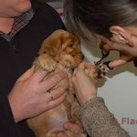 Balou krijgt een demo nageltjes knippen