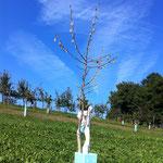 Raupenfrass verursacht durch die raupe der breitfüssigen Birkenblattwespe