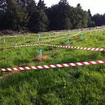 Schutz vor Wildverbiss mit flatternden Bändern und Wildverbissmittel. (15.06.2014)