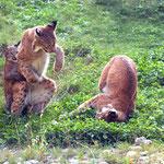 lx95 conflit avec mère et fille adulte
