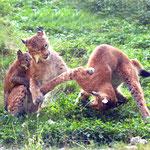 lx96 conflit entre mère et fille adulte