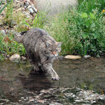 cs033 il ne craint pas l'eau