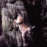 B123 jeune dévalant un rocher