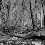 Gempen, forêt