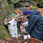 An Antioch University student building a fairy house in White-Rock Woods.