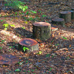 'Stepping Stumps', an element in the nature play area of White-Rock-Woods.