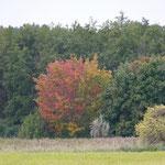 Herbst bei Trassenheide (foto ak)