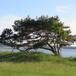 Foto: NABU Insel Usedom