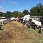 mit ca. 400 Pferden jeden erstes Wochenende im September 4 Tage