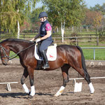 Cindy beim Training in Zerbst
