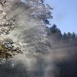 Sonne, Rauch und Bäume verschmelzen zu einer Einheit im Schaugarten des Holzbildhauers Woodharry in Niederleis.