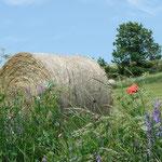 Natur und Landwirtschaft.