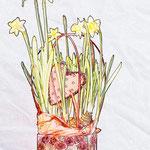 Semaine 8 : retour sur la St Valentin et ce bouquet de narcisses offert à ma douce :)