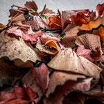 Semaine 42 : C'est l'automne, et un tapis de feuilles de bois ...