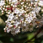 Semaine 10 : Le printemps approche, la nature reprend ses droits, les photographes se régalent ...
