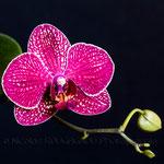 Semaine 15 : On reste dans la couleur avec cette repousse d'orchidée. Très botanique en ce moment ...