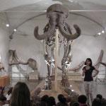 Museo di paleontologia - Firenze