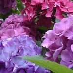 I fiori...