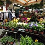 les fleurs du marché