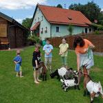 Die Schneiderhof-Ziegen: Sternchen, Mecki, Schnucke und Flocke