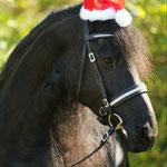 Ein Gruß vom Nikolaus - Latino von Birgit