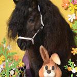 Frohe Ostern wünscht das wohl einzigartigste Showpony Österreichs: Emil vom Wiesenhof