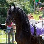 """Isabel und ihr wunderbarer Loretto - ein ganz besonderer """"Showact"""" am Fest der barocken Pferde"""