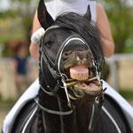 Man weiss es nicht - lacht Habsburg die Turniersaison aus oder findet er es zum Gähnen