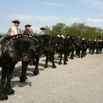 Der erste Auftritt im Jahr 2010: 15 Friesenpferde in Reih und Glied! Wo kann das schöner sein als im kaiserlichen Fest Schloss HOF?!