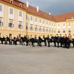 16 Friesen in eleganter Aufmachung bei wunderschönem Wetter - ein Bild welches in Österreich selten zu sehen ist!
