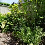 庭のコーナーに低木とグリーン