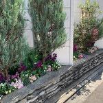 常緑樹と季節のお花