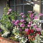 パブリックスペースの腰高花壇