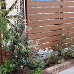 新設花壇のメインにフェイジョアを植栽。他に鉢植えで管理されていた植物も移植。