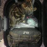 Атос едет в отпуск.