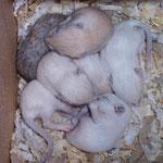 Babys mit 2 Wochen (pssst! nicht wecken!^^)