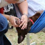 Die DRK-Rettungshundestaffel aus dem Schwalm-Eder-Kreis sorgte für ein spannendes Rahmenprogramm.