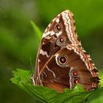 Im Schmetterlingsgarten Aumühle, Canon EOS 300D, Schneider Kreuznach Componon 1:5,6/150 mm am Balgengerät