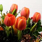 Tulpen im Makrostudio, Canon EOS 300D, Yashinon 1:2,0/50 mm