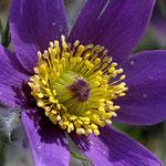 Im Botanischen Garten, Canon EOS 300D, Noflexar 1:4/105 mm am Balgengerät