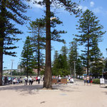 Bäume entlang des bondi beach.