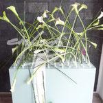 Objekt Meisterpruefung Einfach Blume