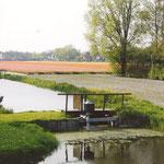 Bollenvelden met overslagpomp bij de Dijkstalweg, 2004, voor de aanleg van de Twuyverhoek.