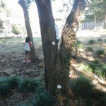 木のセリフ①