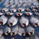 Hier wird der Fisch fürs Curry getrocknet - am Strassenrand