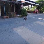 Hunde auf der Strasse
