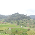 Auf dem Weg Richtung Sarangan - Wochenend-Spot der Balinesen