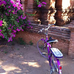 Unterwegs mit meinem violetten Velo