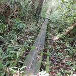 Auf in den Regenwald