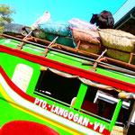 Schweine, Ziegen, Leute - alles sieht man auf den Dächern der Busse